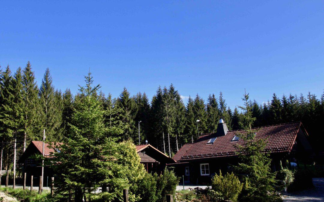 Ein Dorf im Wald – eine Einladung